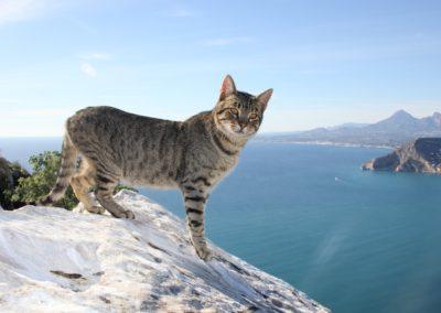 cat-264077_1280
