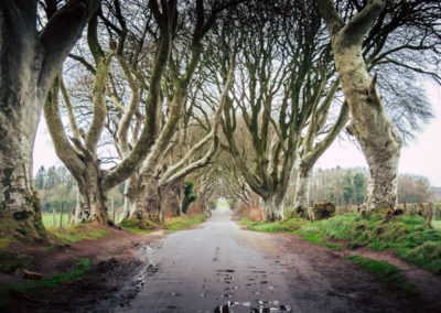 Irish arboreal roadway